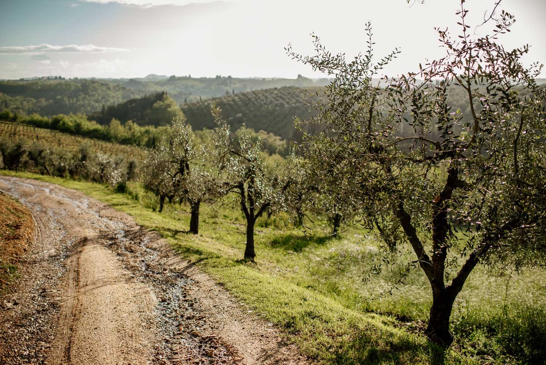 Farm Stay Tuscany Italy